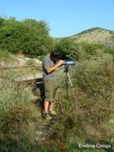 Bird monitoring!!